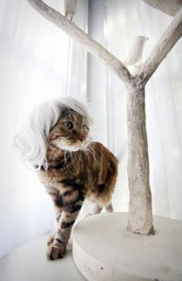 ネコ用白カツラ