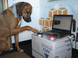 アマゾンの新Webサービスは、犬入力