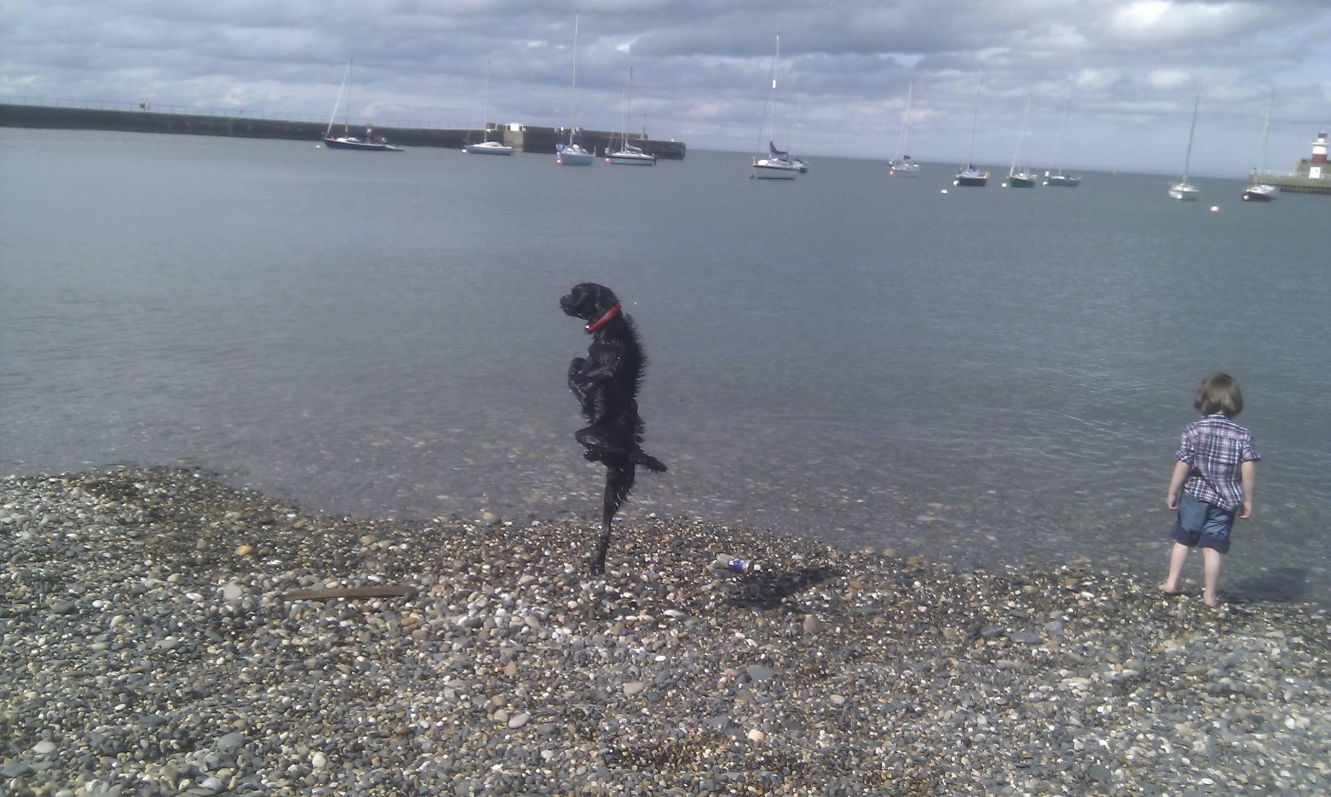 海が嬉しくて一本足で飛び跳ねる犬